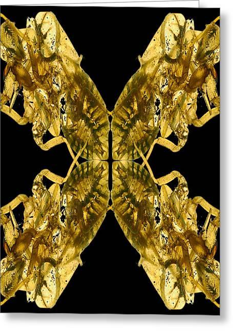 Cicada Shells Greeting Card