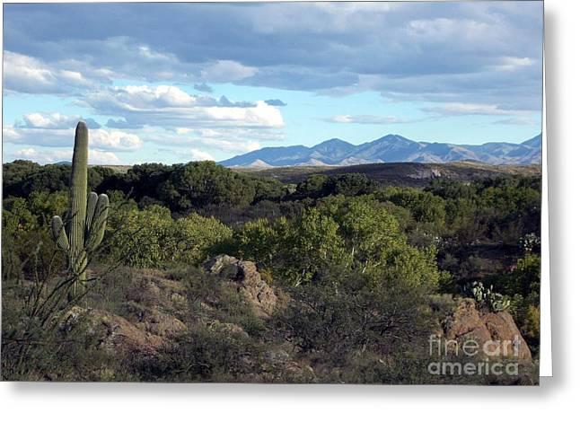 Cienega Preserve Greeting Card
