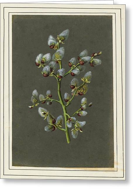 Circa A Pussy Willow Greeting Card by MotionAge Designs
