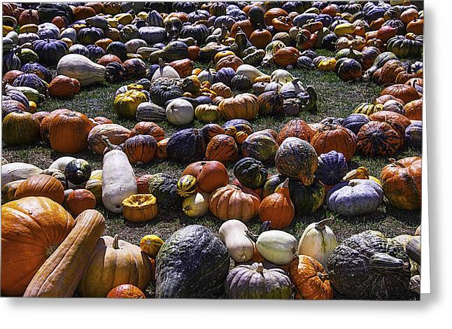 Circle Of Gourds Greeting Card by Garry Gay