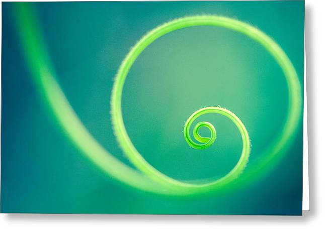 Circle Of Life Greeting Card by Debi Bishop