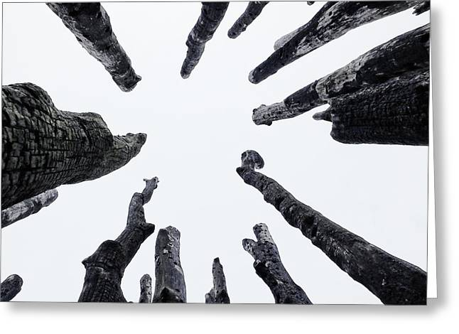 Circle Of Trees Greeting Card