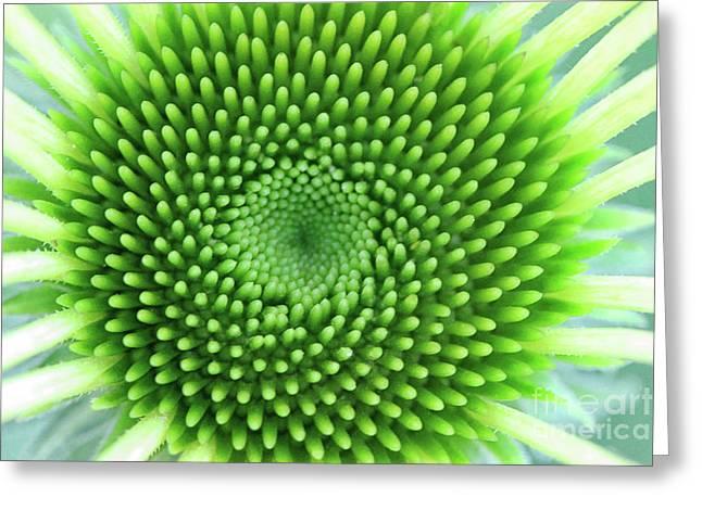 Circles Of Life Greeting Card