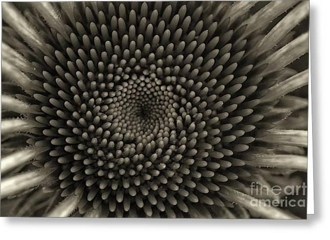 Circles Of Life Monochrome Greeting Card
