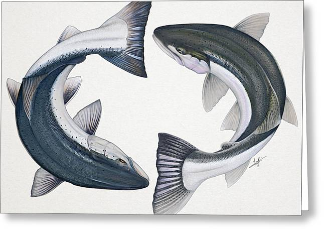 Circling Atlantic Salmon And Steelhead Greeting Card by Nick Laferriere