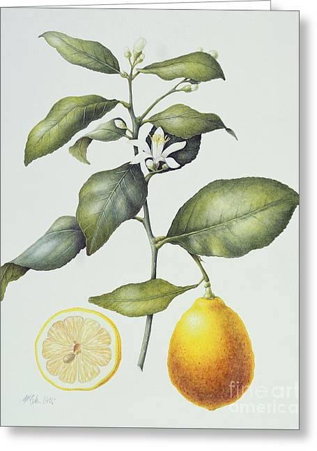 Citrus Lemon Greeting Card by Margaret Ann Eden