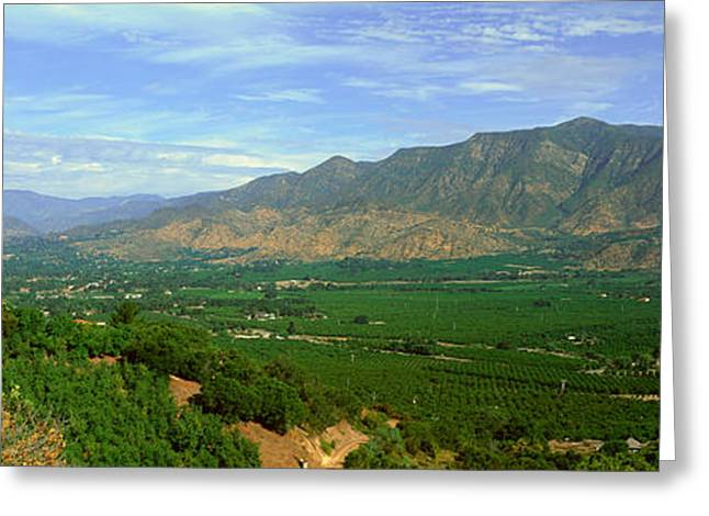 Citrus Trees, Ojai Valley, California Greeting Card by Panoramic Images