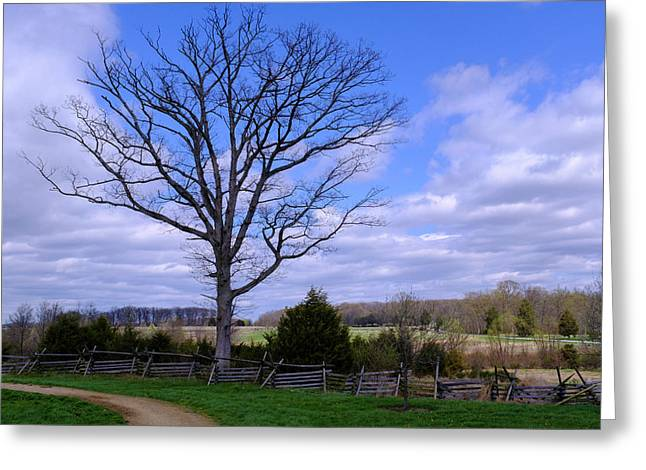 Civil War Fence And Tree With No Leaves Next In Gettysburg Penns Greeting Card