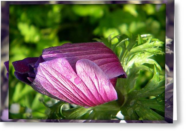 Clam Flower Greeting Card by Amanda Eberly-Kudamik