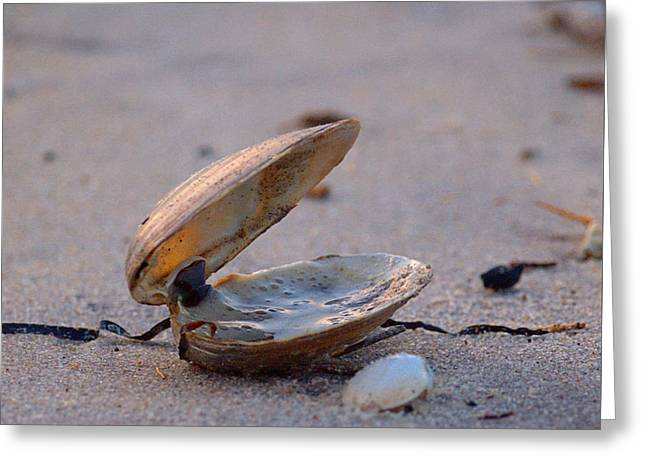Clam I Greeting Card by  Newwwman