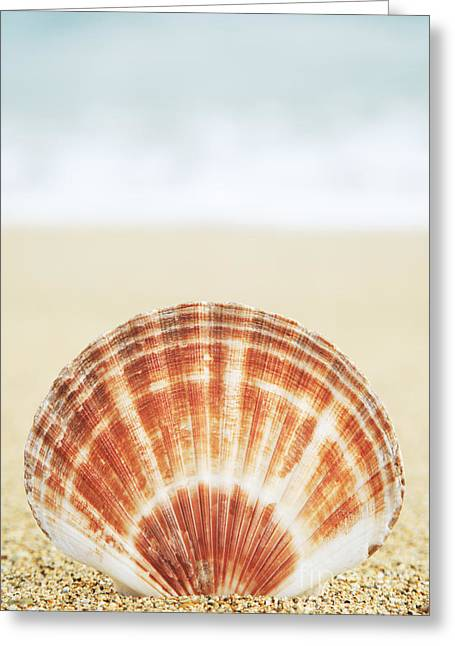 Clam Shell Greeting Card by Brandon Tabiolo - Printscapes