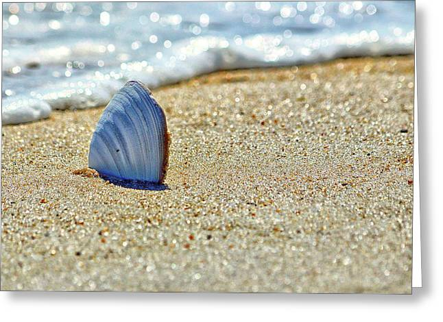 Clamshell In The Waves On Assateague Island Greeting Card