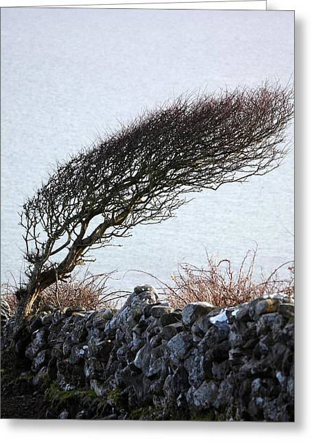 Clare Coast Tree Greeting Card by Tom  Doherty