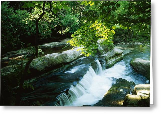 Best Sellers -  - Wooden Sculpture Greeting Cards - Clare Glens, Co Clare, Ireland Greeting Card by The Irish Image Collection