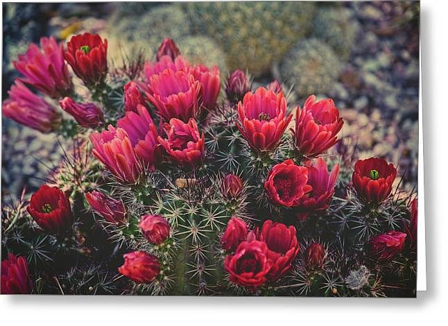 Claret Cup Blooms Greeting Card by Lucinda Walter