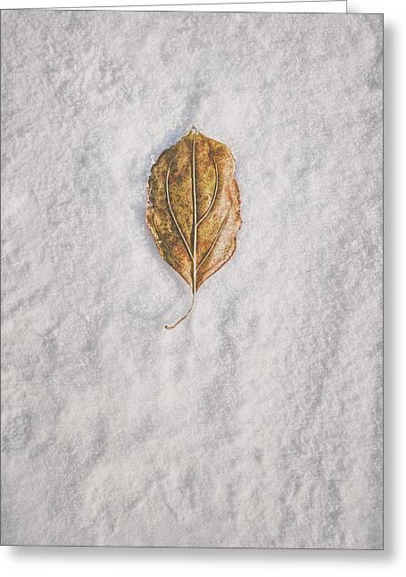 Clash Of Seasons Greeting Card by Scott Norris