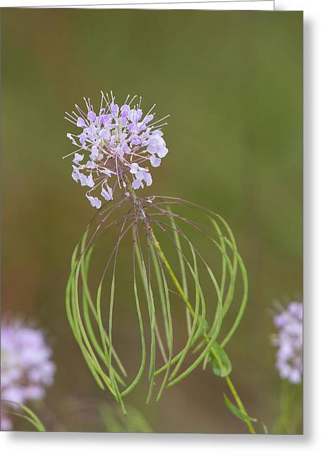 Clasping Warea Greeting Card