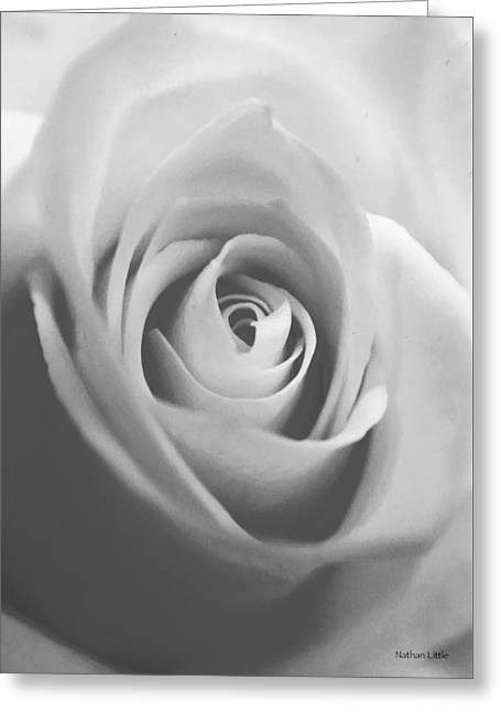 Classic Bw Rose Greeting Card
