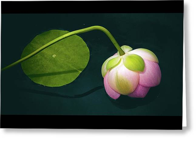 Classic Lotus Greeting Card by Jessica Jenney