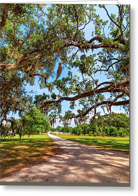 Classic Southern Beauty - Evergreen Plantation Greeting Card
