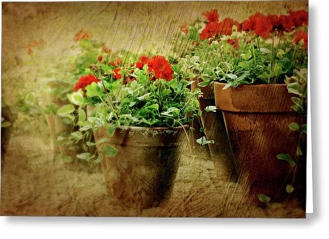 Clay Pots Of Geraniums Greeting Card