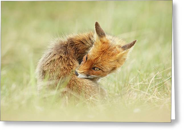 Clean Fox Greeting Card by Roeselien Raimond