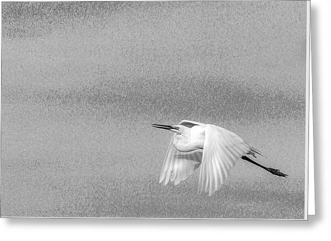 Clear For Take Off Greeting Card by Marvin Spates
