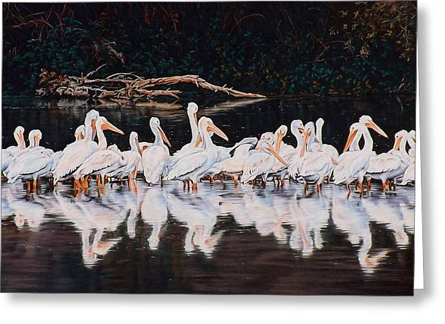 Clear Lake Pelicans Greeting Card by Linda Becker
