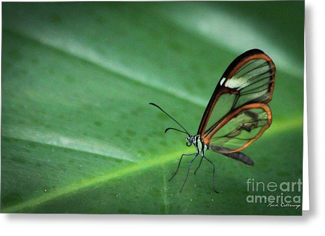 Clear Wing Butterfly Cecil B Day Butterfly Center Art Greeting Card by Reid Callaway