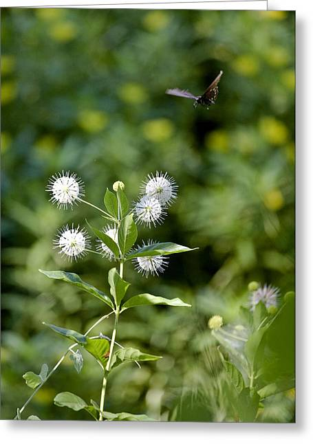 Cleared For Landing Greeting Card by Charlie Osborn