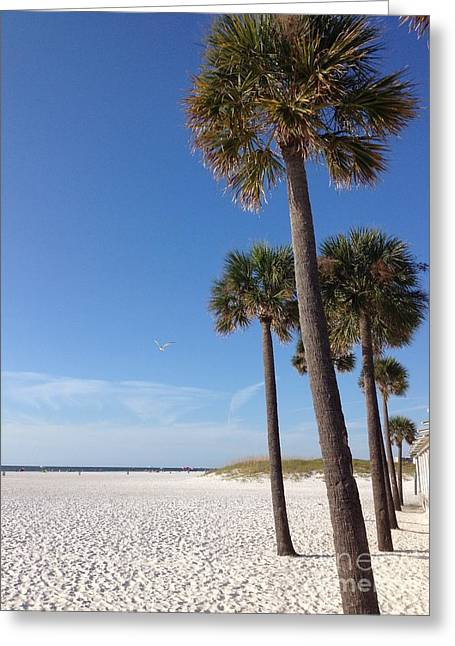 Clearwater Palms Greeting Card