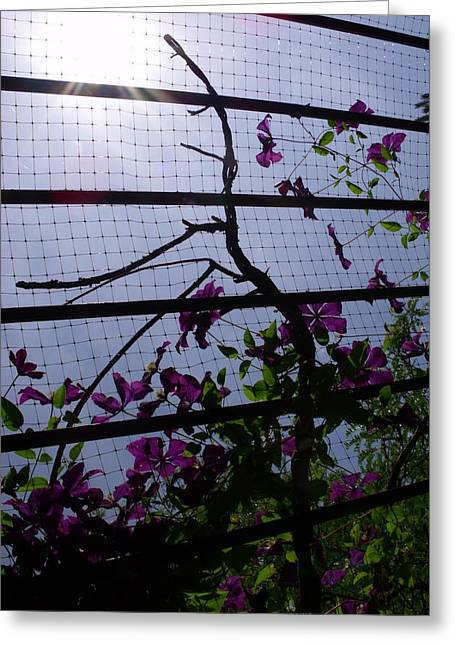 Clematis II Greeting Card by Anna Villarreal Garbis