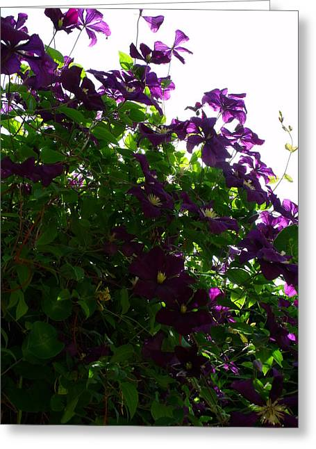 Clematis IIi Greeting Card by Anna Villarreal Garbis
