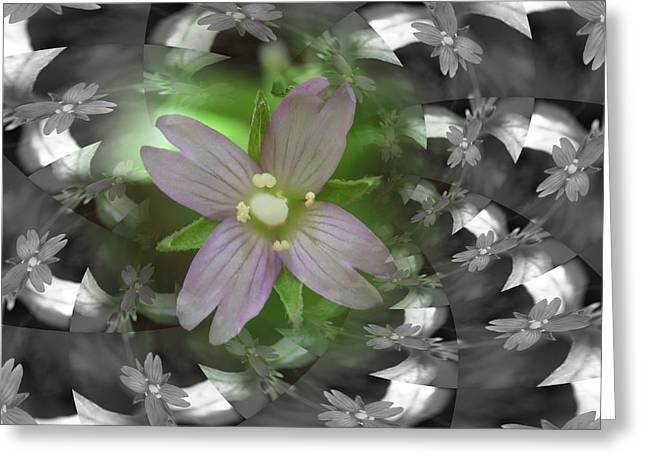 Clematis Greeting Card by Keith Elliott