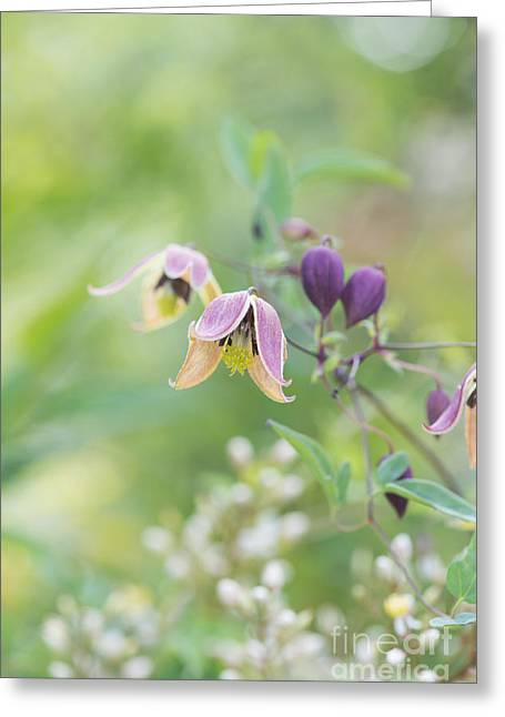 Clematis My Angel In Flower Greeting Card