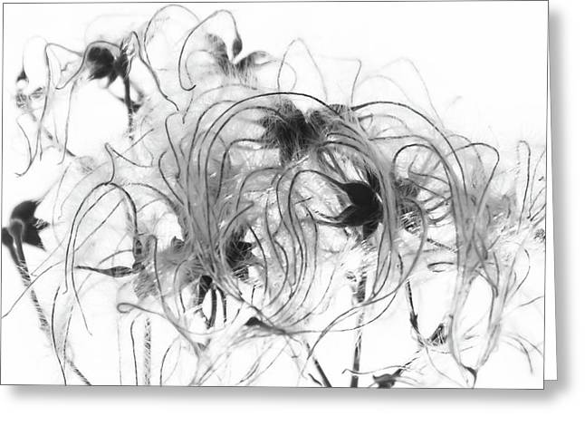 Clematis Seeds Greeting Card