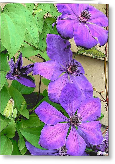 Clematis Trail Greeting Card by Vijay Sharon Govender