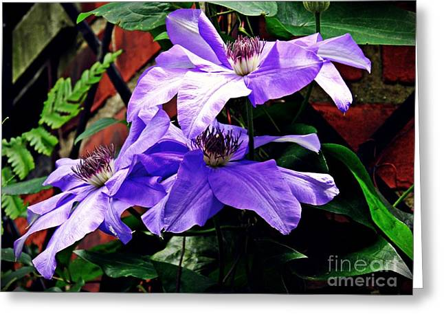 Clematis Trio Greeting Card by Sarah Loft
