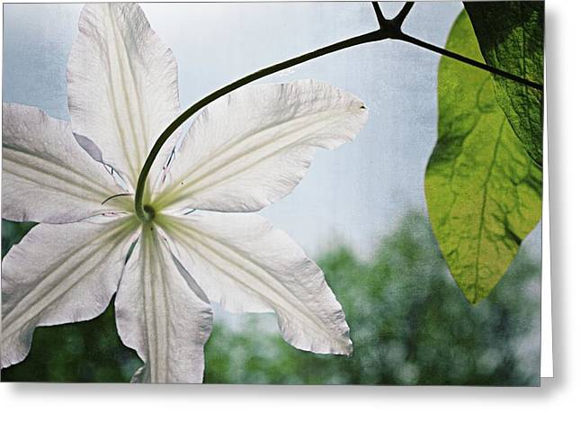 Greeting Card featuring the photograph Clematis Vine And Leaves by Michelle Calkins