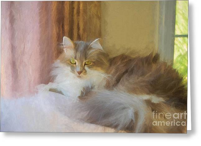 Cleo In Paint Greeting Card by Kelley Freel-Ebner