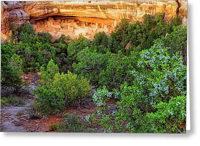 Greeting Card featuring the photograph Cliff Palace At Mesa Verde National Park - Colorado by Jason Politte