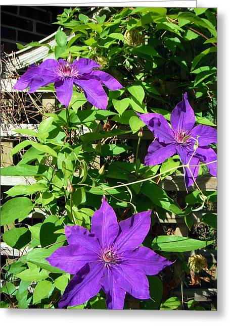 Greeting Card featuring the photograph Climbing Clematis by Susan Carella