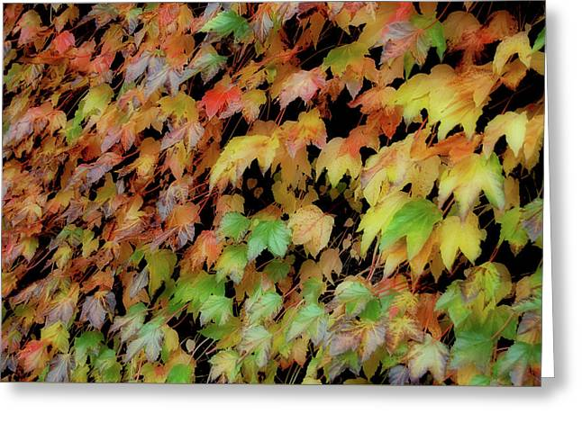 Climbing Color Greeting Card by JAMART Photography