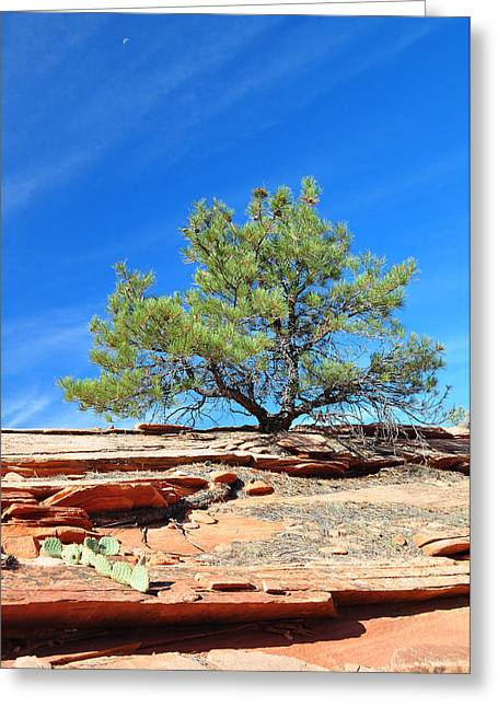 Clinging Tree In Zion National Park Greeting Card by Bruce Gourley