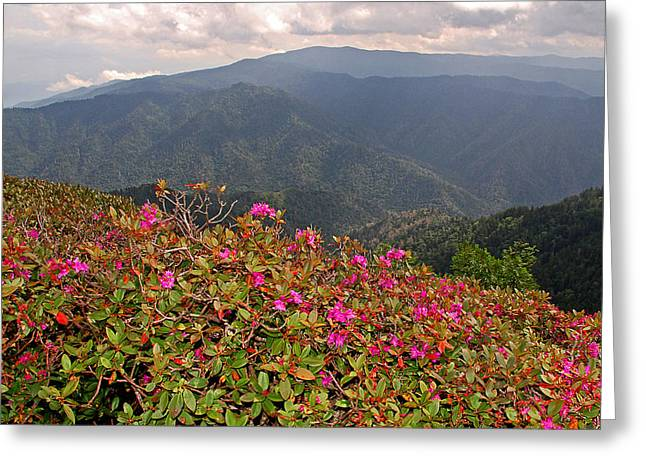 Clingman's Dome From Cliff Top Greeting Card by Alan Lenk
