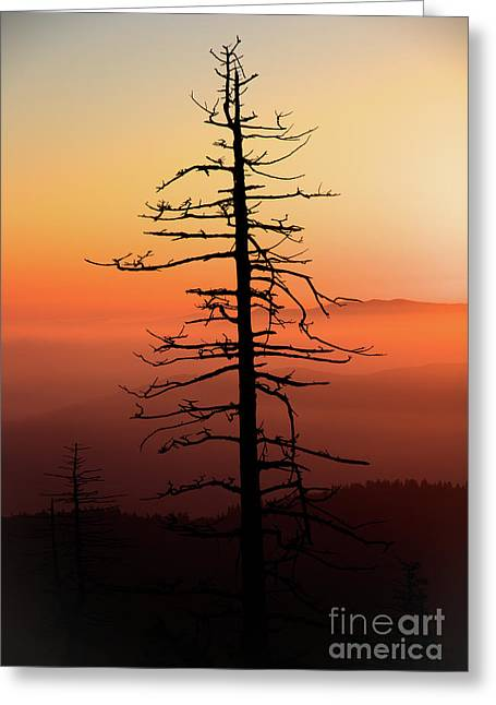 Greeting Card featuring the photograph Clingman's Dome Sunrise by Douglas Stucky