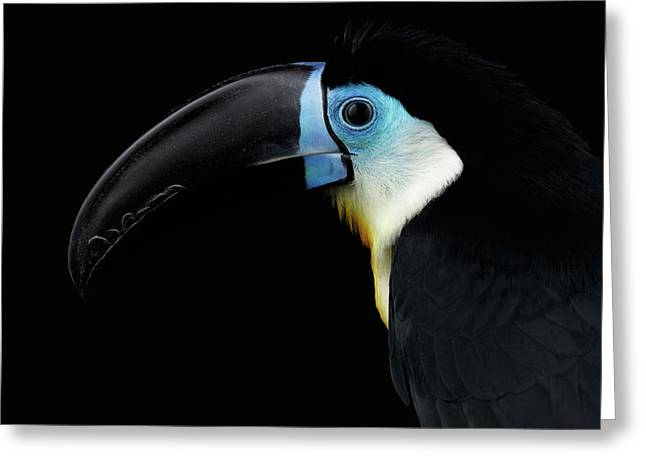 Close-up Channel-billed Toucan, Ramphastos Vitellinus, Isolated On Black Greeting Card by Sergey Taran