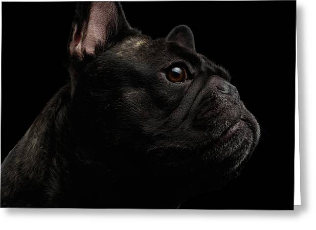 Close-up French Bulldog Dog Like Monster In Profile View Isolated Greeting Card
