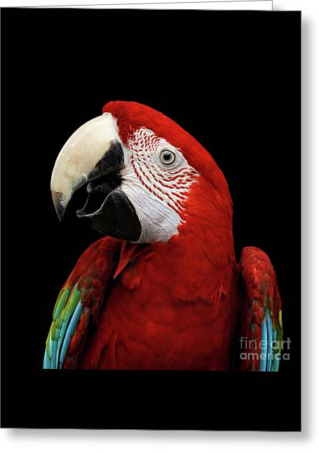 Close-up Funny Portrait Green-winged Macaw, Ara Chloroptera, Isolated Black Background Greeting Card by Sergey Taran