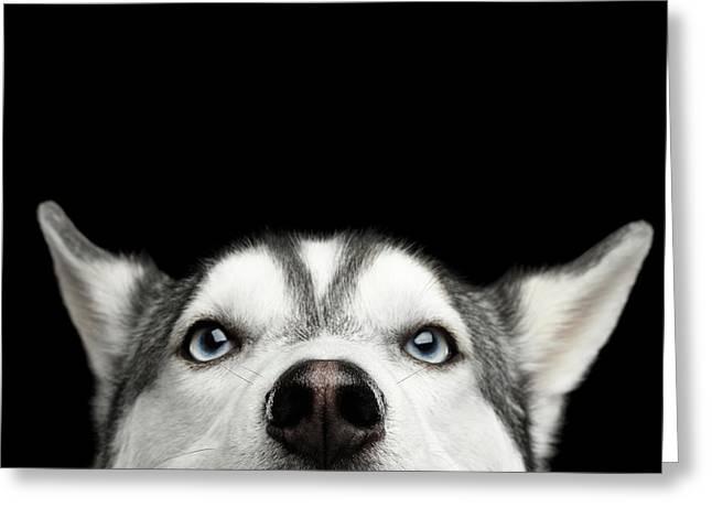Close-up Head Of Peeking Siberian Husky Greeting Card